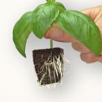 Root Riot Organic Starter Cubes